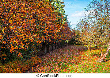 Colorful trees in a garden in the autumn
