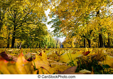 colorful trees in autumn park
