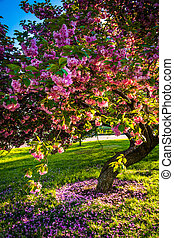 Colorful trees in Druid Hill Park, Baltimore, Maryland. -...