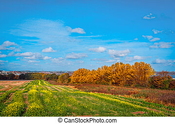Colorful trees on a field in the fall
