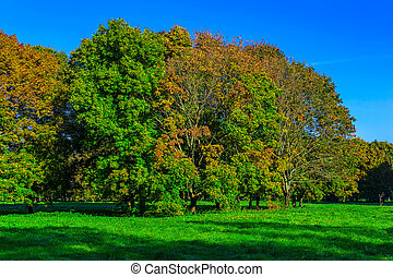 Colorful Trees on Grass in Autumn