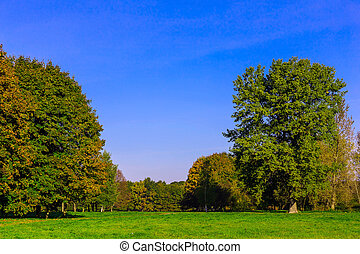 Colorful Trees on Green Grass in Park