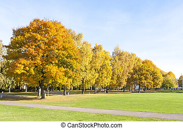 Colorful trees with yellow leaves in autumn