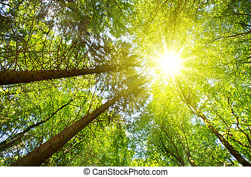 Beautiful morning scene in the forest with sun rays .Germany forest.