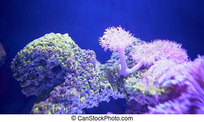 Colorful tropical coral and algae in clear sea water, close up