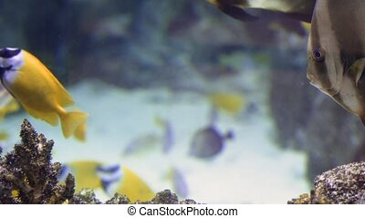 Colorful Tropical Coral Reefs. Picture of a beautiful underwater colorful fishes and corals in the tropical reef