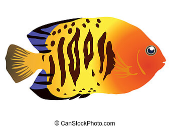 colorful tropical fish - Vector illustration of colorful...