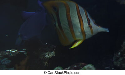 Colorful tropical fish swim near other marine life