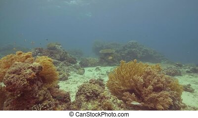 Colorful tropical fish swimming over coral reef on seabed...
