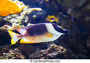 Colorful tropical fish under water