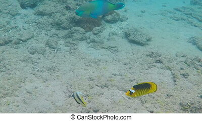 Colorful tropical fishes - Tropical fishes underwater in...