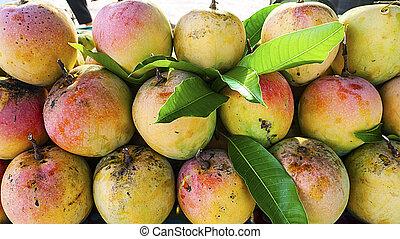 Colorful tropical mango