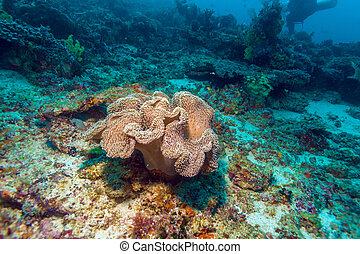 Colorful Tropical Reef Landscape with Soft Corals, Balinese...