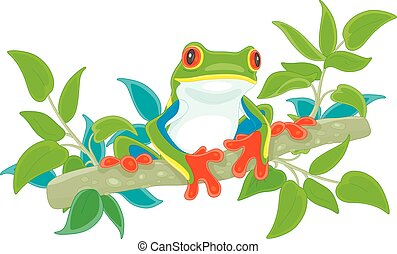 Colorful tropical tree-frog on a branch