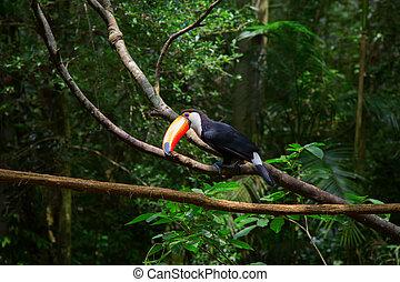 Colorful tucan