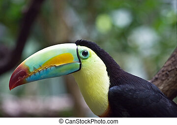 Colorful tucan in the Zurich zoo