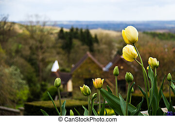 Colorful tulip flowers with countryside in the background - selective focus