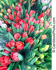 Colorful tulips for sale at market