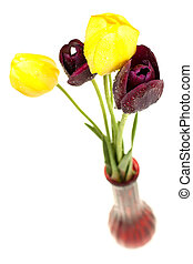 Colorful tulips in vase