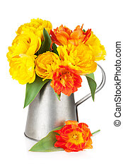 Colorful tulips in watering can
