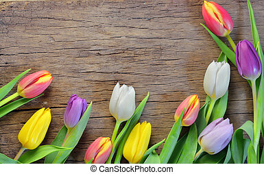 Colorful tulips on wooden