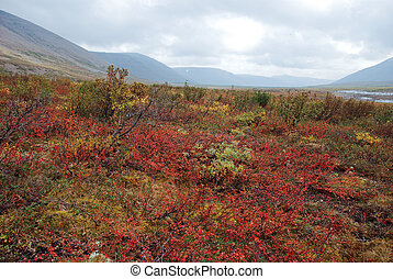 Colorful tundra. - The end of summer gives fancy paint...