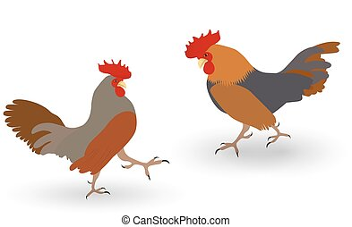 Colorful Two fighting cock against white background. Vector Illustration.