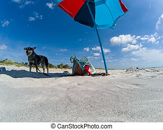 colorful umbrella on sunny day at the beach