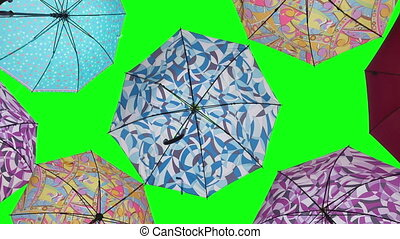 Colorful umbrellas on green screen