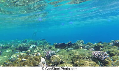 Colorful Underwater world in Red Sea with Tropical Fish,...
