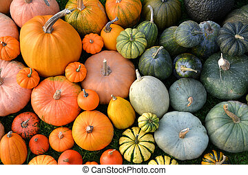 Colorful varieties of pumpkins and squashes