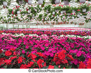 Colorful variety of flowers in a garden center