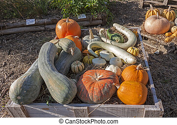 Colorful variety of gourds
