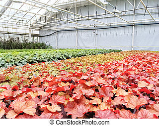 Colorful variety of plants in a garden center