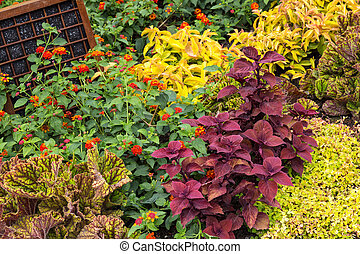 Colorful variety of plants in a garden