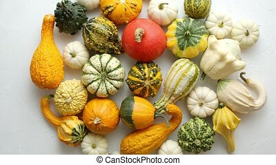 Colorful various kinds mini pumpkins on white background, top view, flat lay. Fall background. Halloween or Thanksgiving celebration composition.