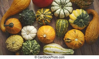 Colorful various kinds mini pumpkins on wooden background, top view, flat lay. Fall background. Halloween or Thanksgiving celebration composition.