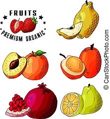 Colorful vector illustration. Food design with fruits. Hand...