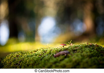 Colorful view of a mushroom and moss