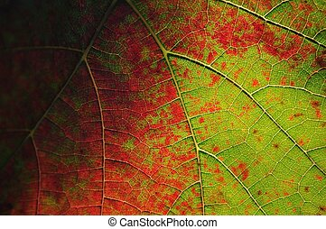 Colorful vine leaf for background