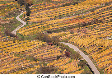 Colorful Vineyard in Wachau valley in Austria.