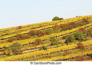 colorful vineyard landscape