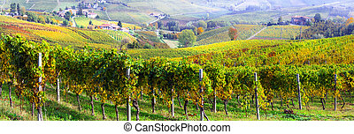 Colorful vineyards in Piedmont region,Italy.