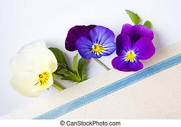 Colorful viola flowers in an envelope