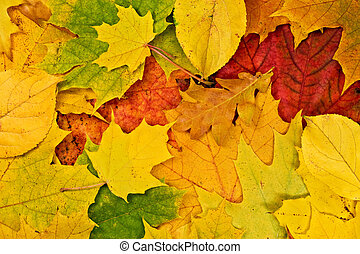 vivid background of fallen autumn leaves