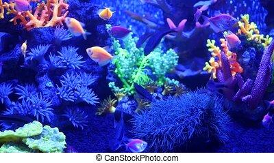 Colorful vivid fishes glow, violet aquarium under ultraviolet uv light. Purple fluorescent tropical aquatic paradise exotic background, luminous shiny ecosystem, vibrant fantasy decorative neon tank.
