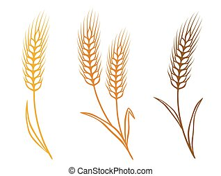 colorful isolated wheat ears icons with grain