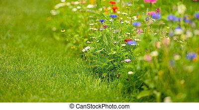 Colorful Wildflowers Blooming In Summer.