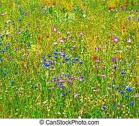 colorful wildflowers in the meadow