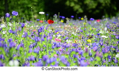 colorful wildflowers on a meadow